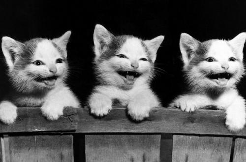 gatitos felices